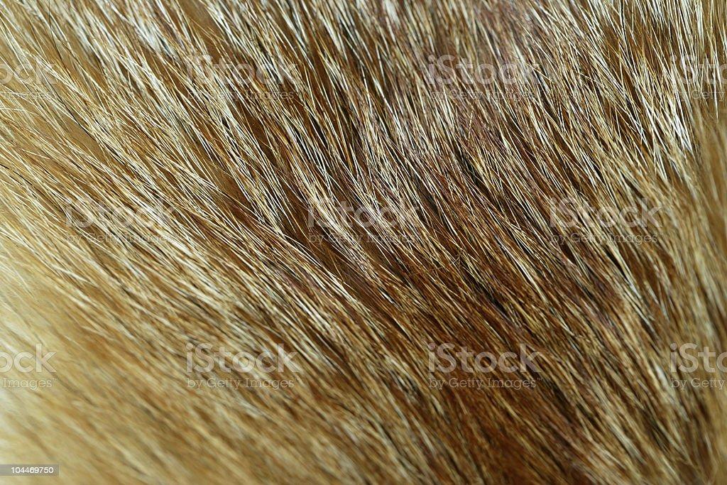 Foxy stock photo