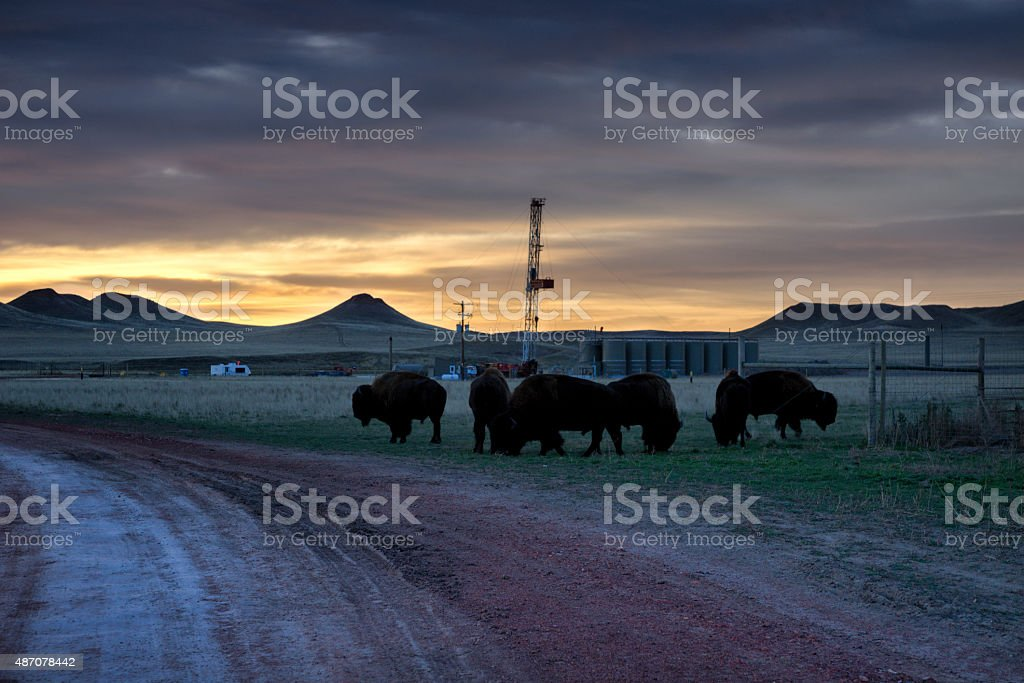 Fracking Drill Rig on the Prairie With Bison Buffalo Herd stock photo