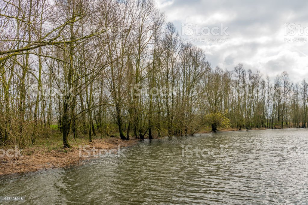 Fragile budding trees on the bank of a creek stock photo