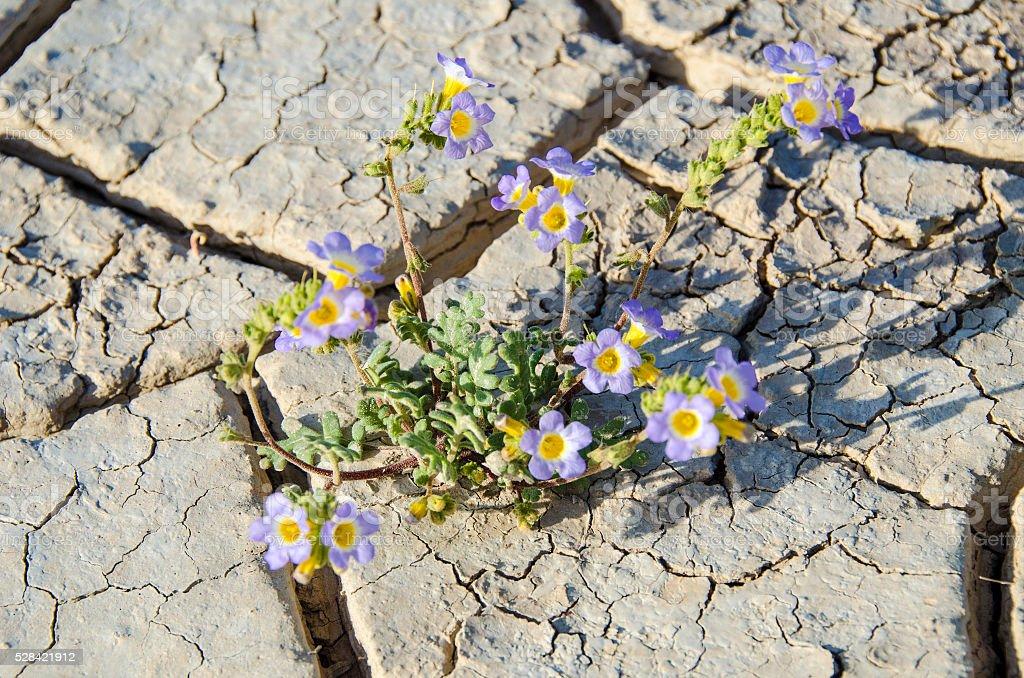 Fragile desert floor stock photo