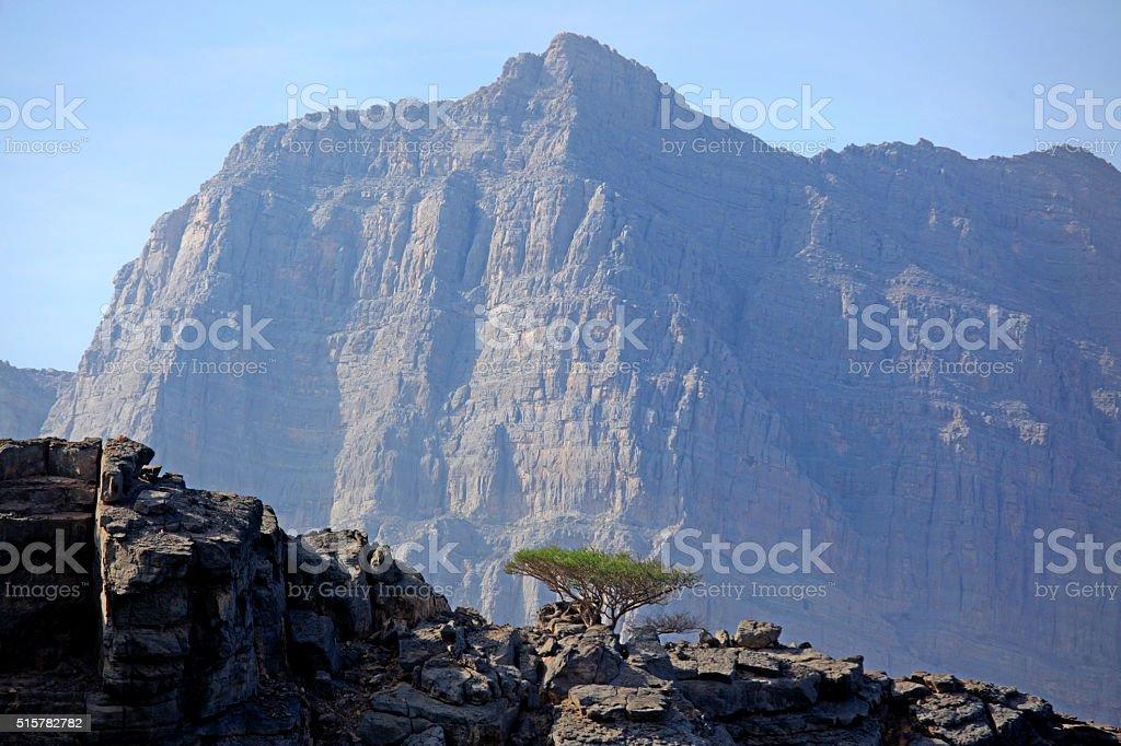 Fragile nature, Musandam Fjords, Oman stock photo