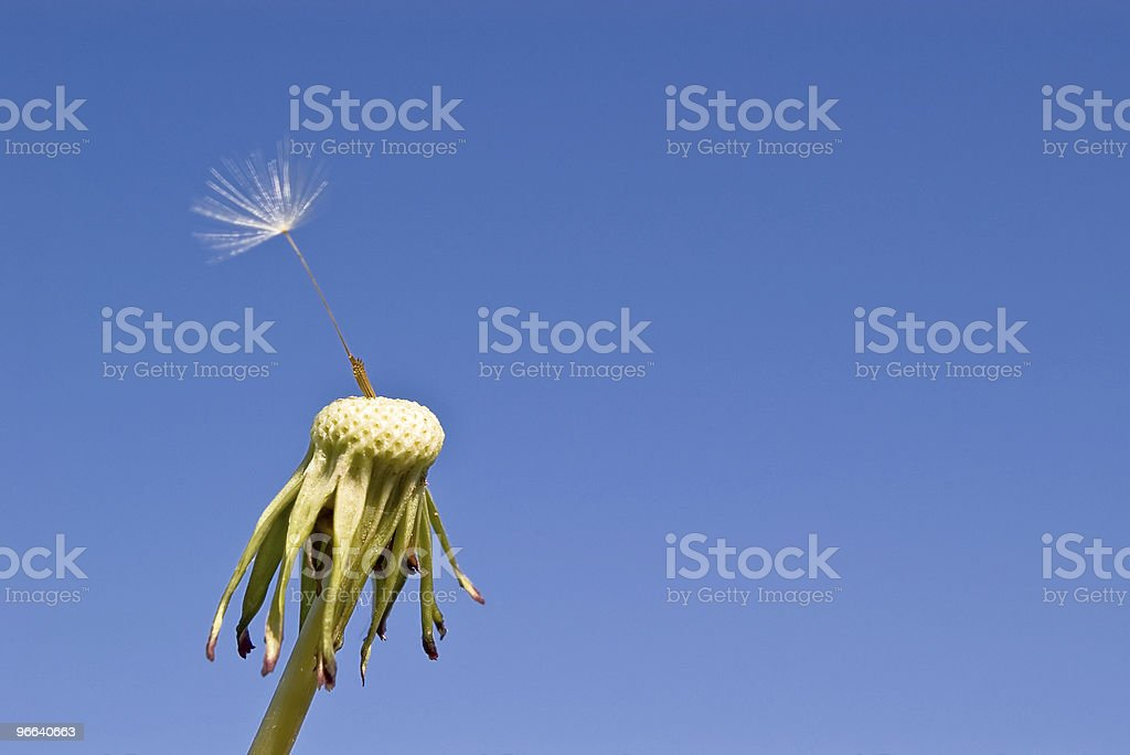 fragility stock photo