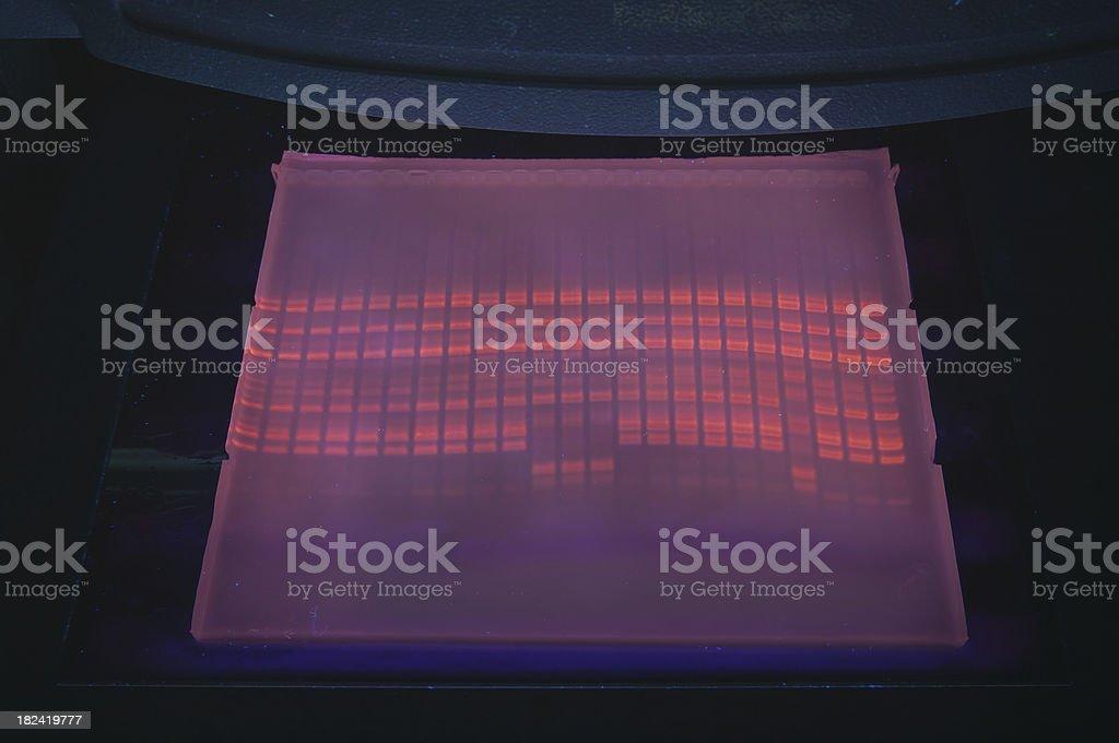 DNA fragment analysis stock photo