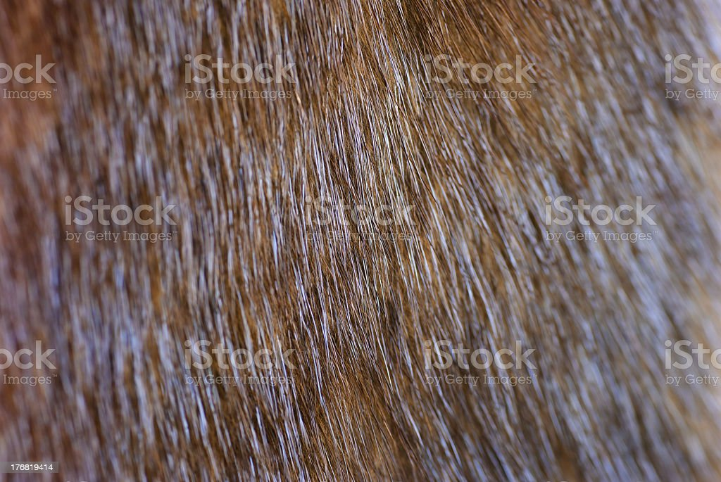 Fragment of brown mink fur, close-up stock photo