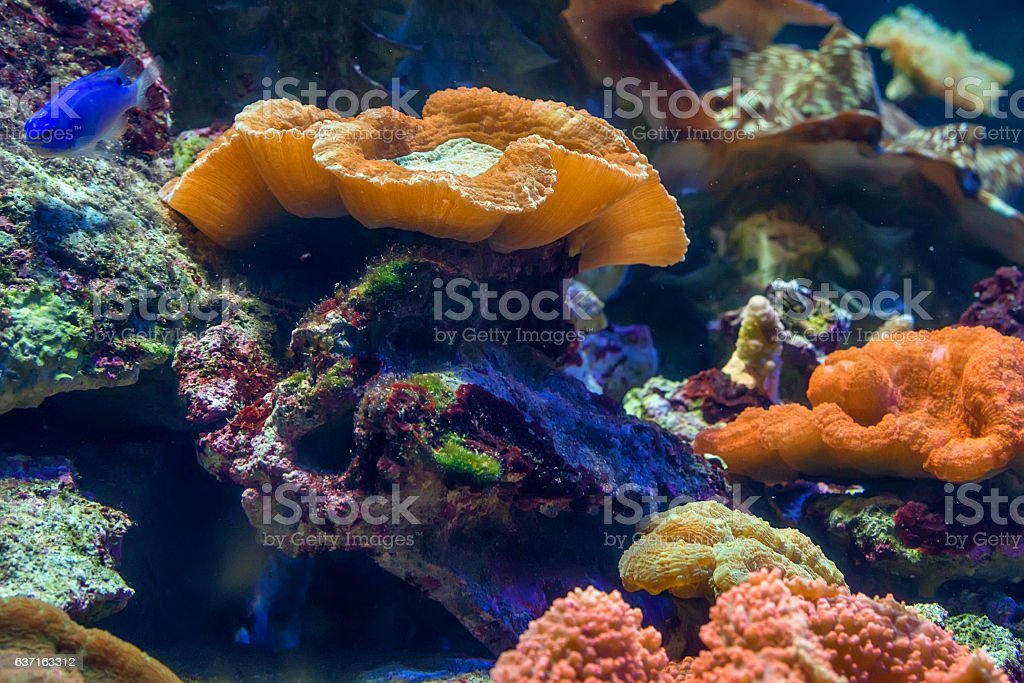 Fragment of colorful coral reef stock photo