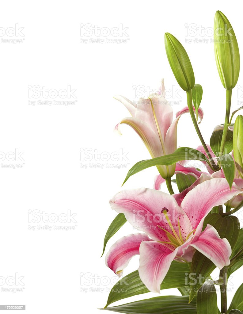 fragment of pink  lilies ' bunch stock photo