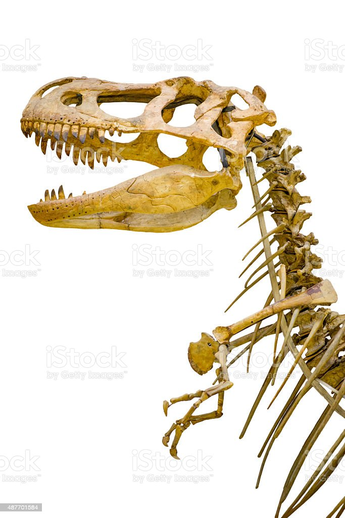fragment of the skeleton of Tyrannosaurus rex stock photo