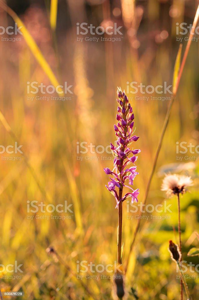 Duftende Orchid Lizenzfreies stock-foto