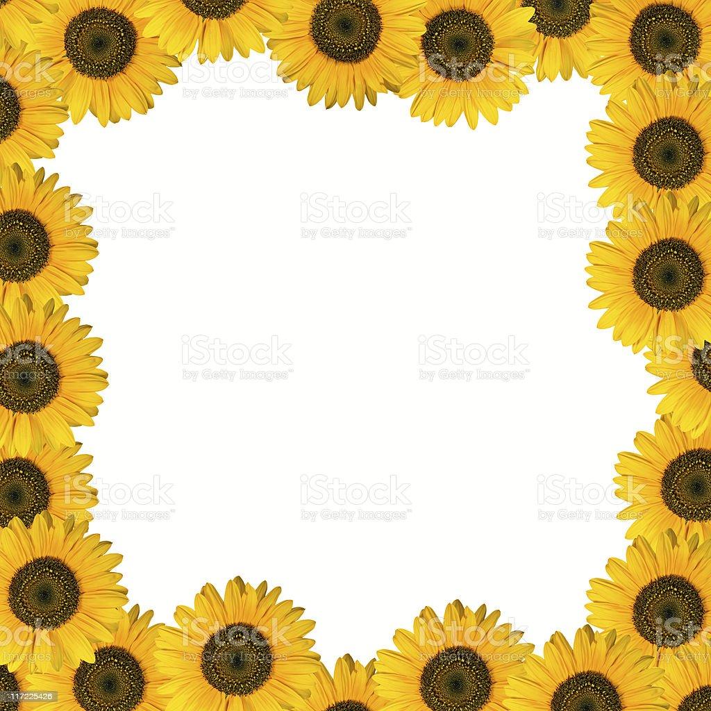 Frame Design of Sunflower stock photo