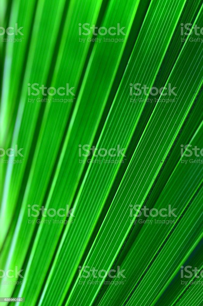 Frame filling macro of diagonal palm leaf segments stock photo