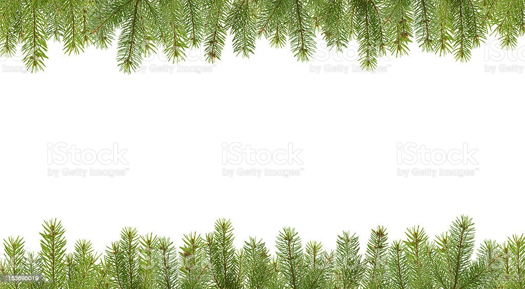 frame from firtree branches stock photo