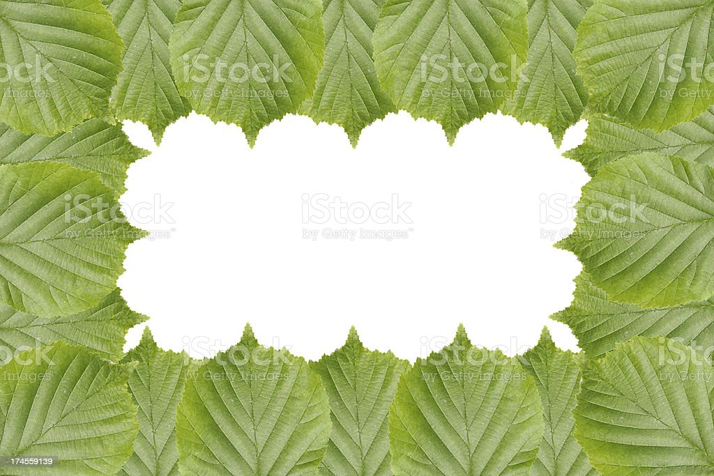 Frame from leaves of the walnut tree royalty-free stock photo