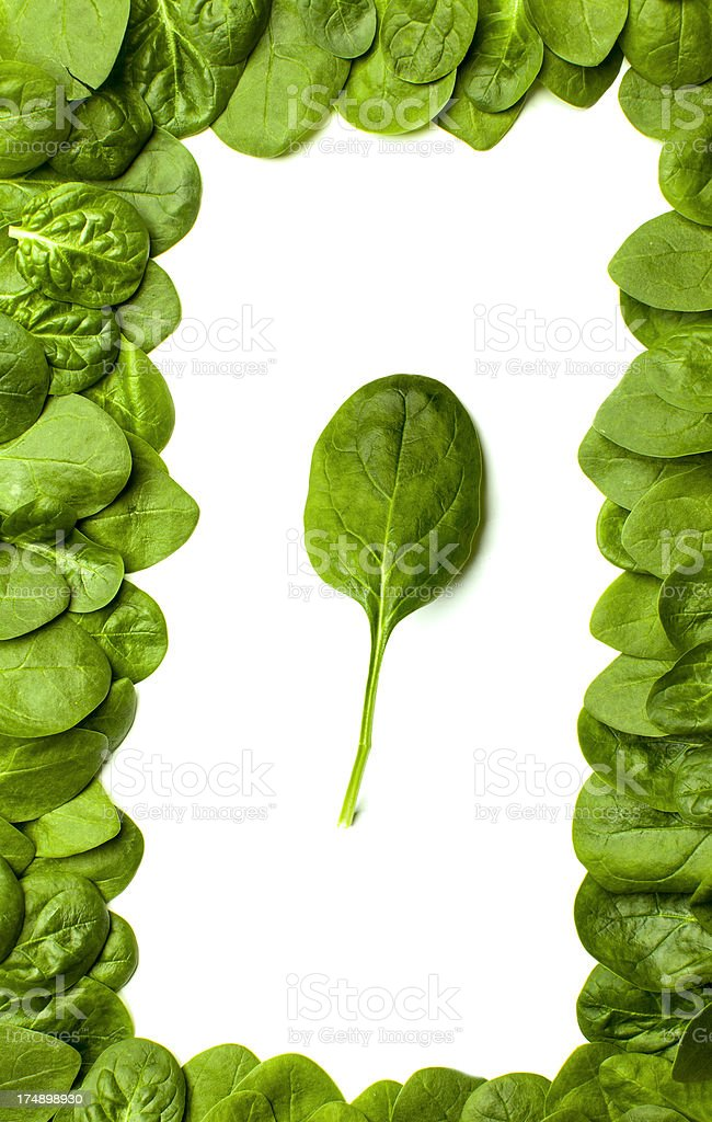 Frame from leaves of young spinach. royalty-free stock photo