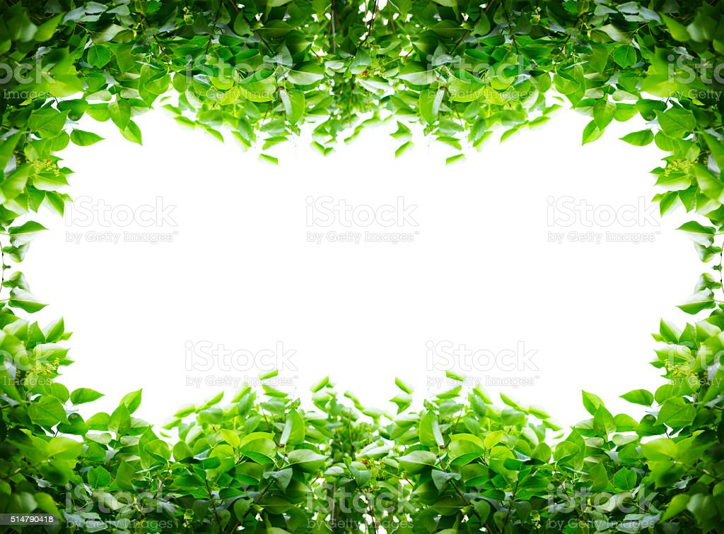 frame from leaves stock photo