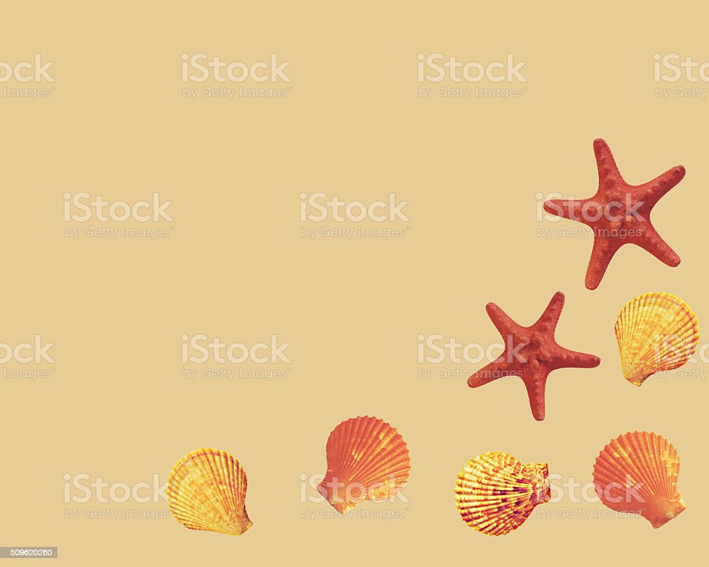 Frame from sea shells and starfish. stock photo