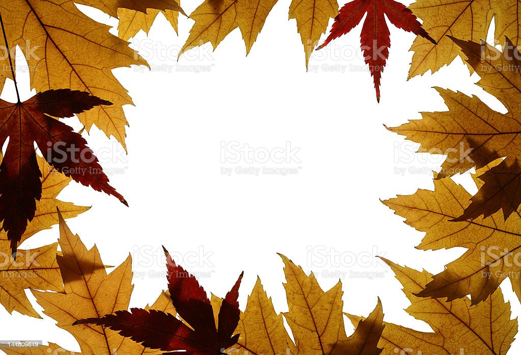 Frame from Silver and Japanese Maple Leaves Isolated on White royalty-free stock photo