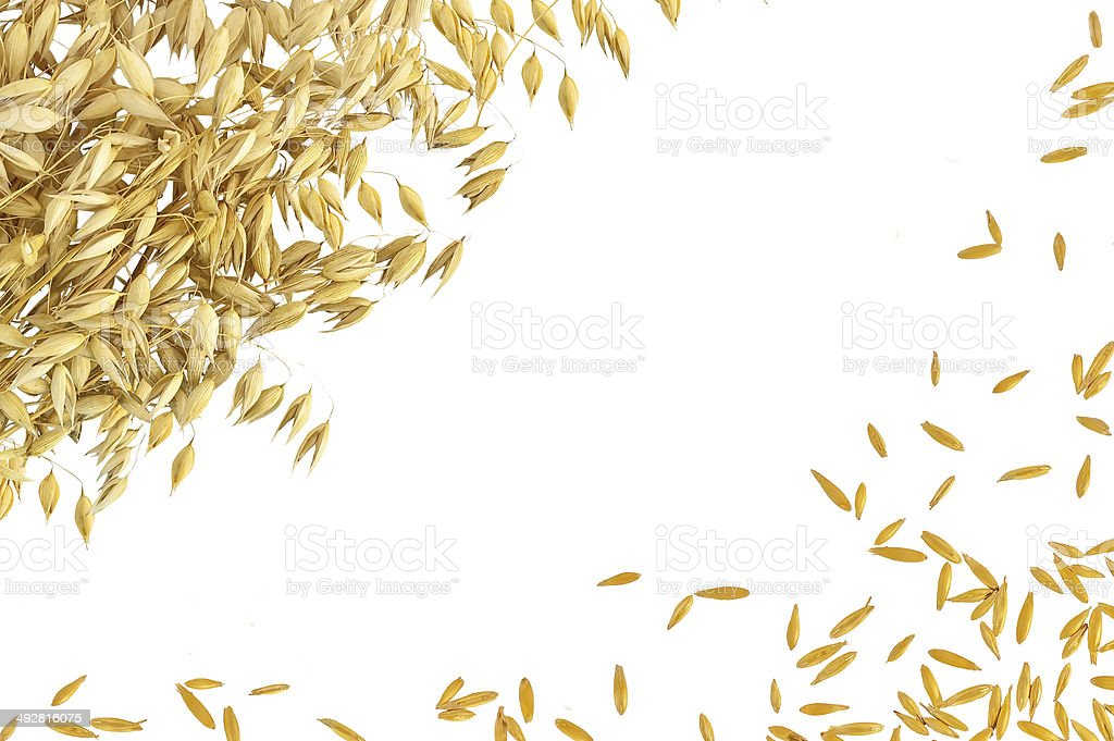 Frame from the stems and grains of oats stock photo
