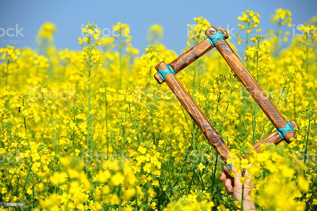 Frame in canola field royalty-free stock photo