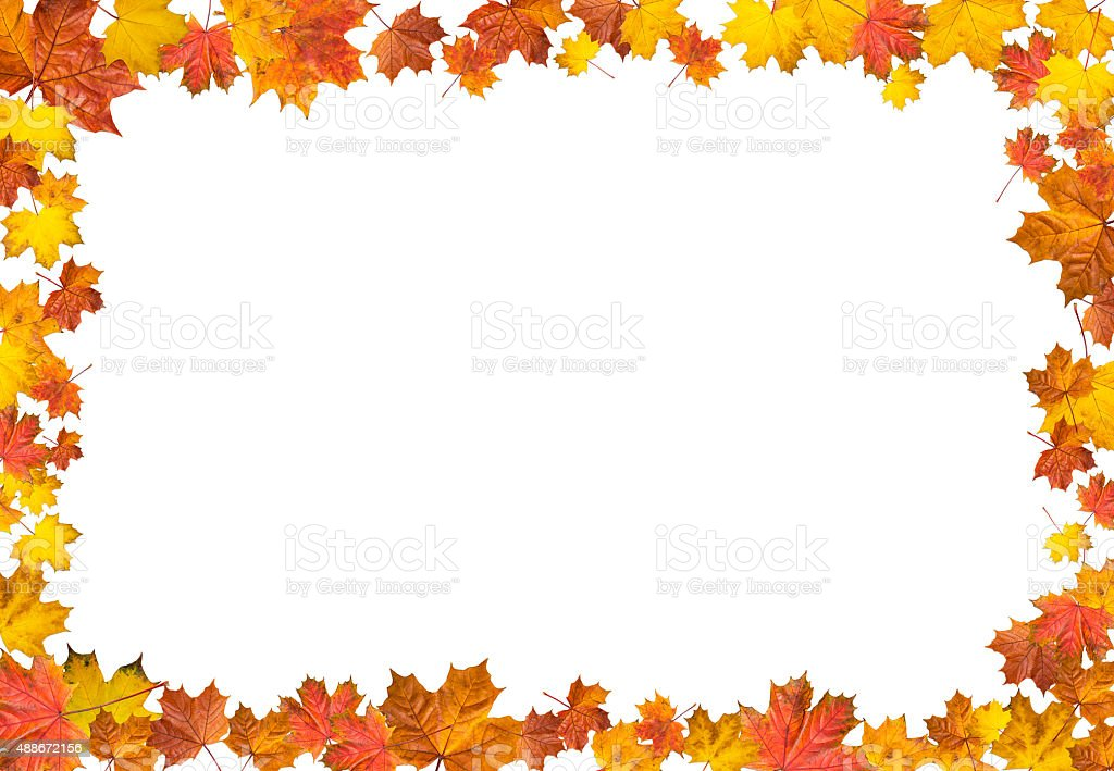 Frame made of bright maple leaves. stock photo