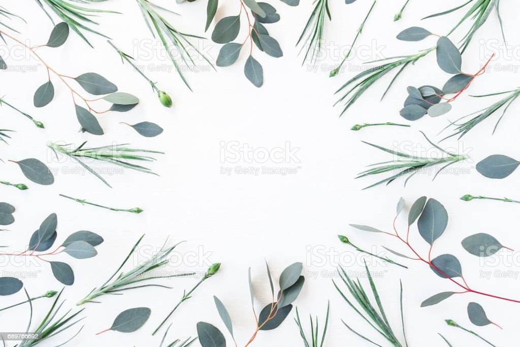 Frame made of carnation flowers and eucalyptus branches. Flat lay stock photo