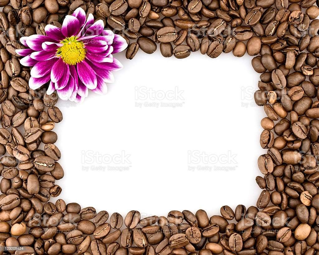 Frame made of coffee and chrysanthemums royalty-free stock photo