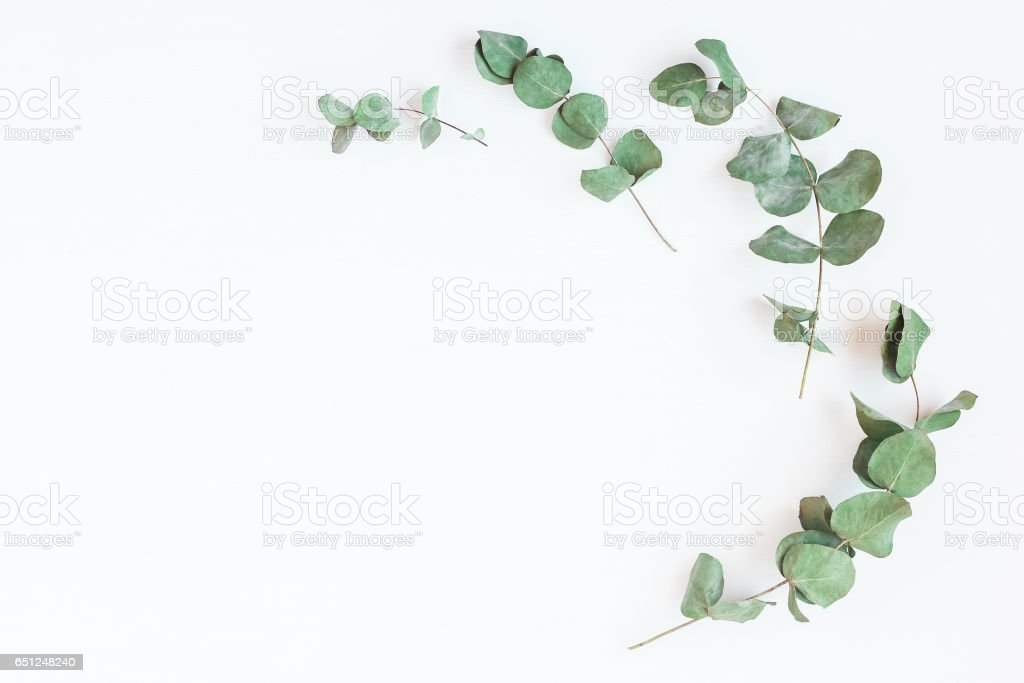 Frame made of eucalyptus branches. Flat lay, top view stock photo