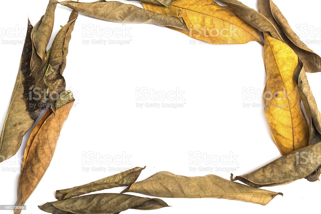 frame made of leaves isolated stock photo
