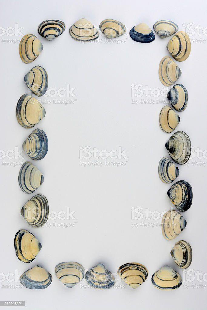 Frame made of sea shells, gey blue and white stock photo