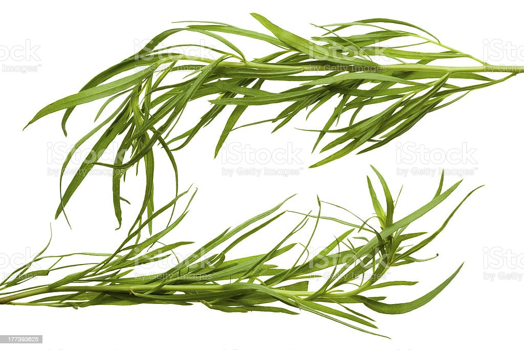Frame made of tarragon twigs royalty-free stock photo