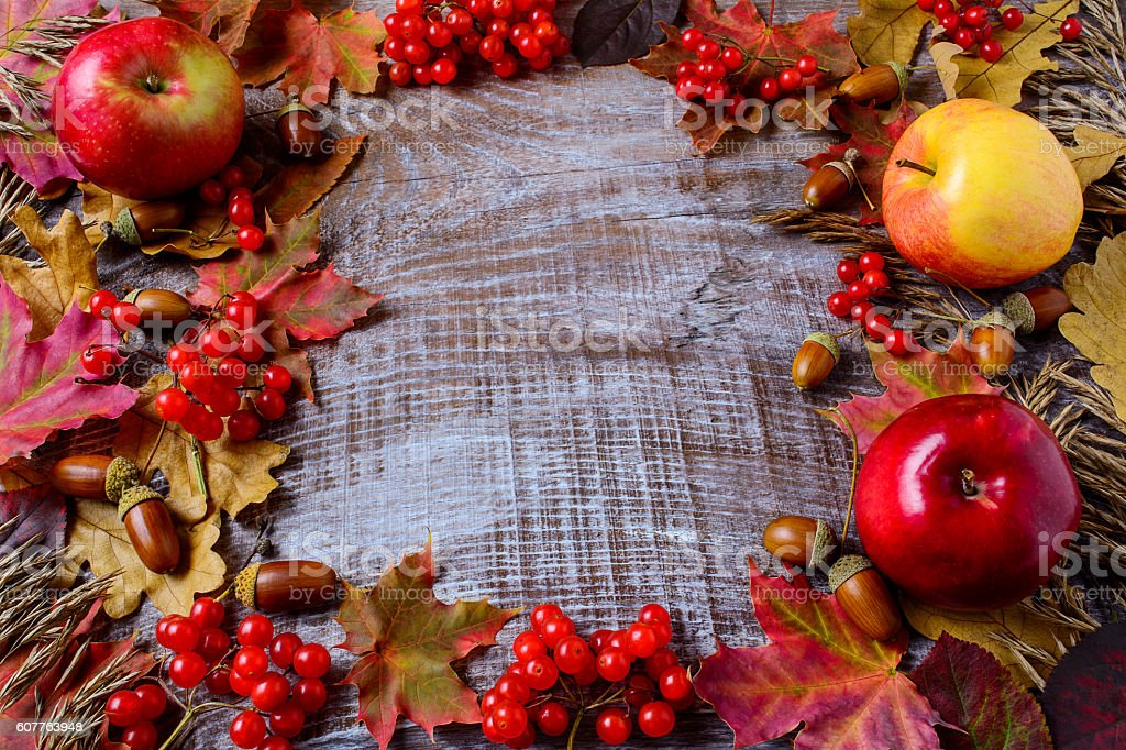 Frame of apples, acorns, berries and fall leaves stock photo