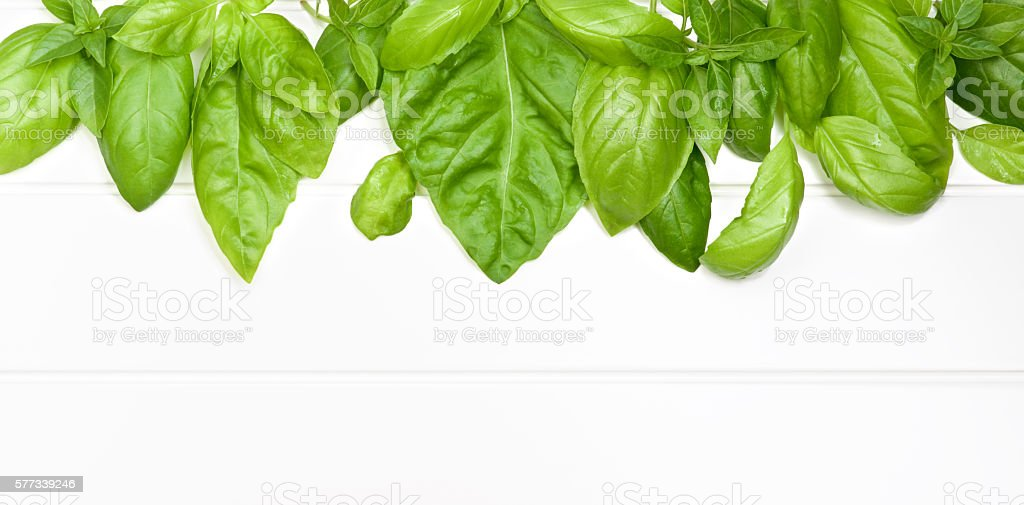 Frame of Basil Leafs stock photo