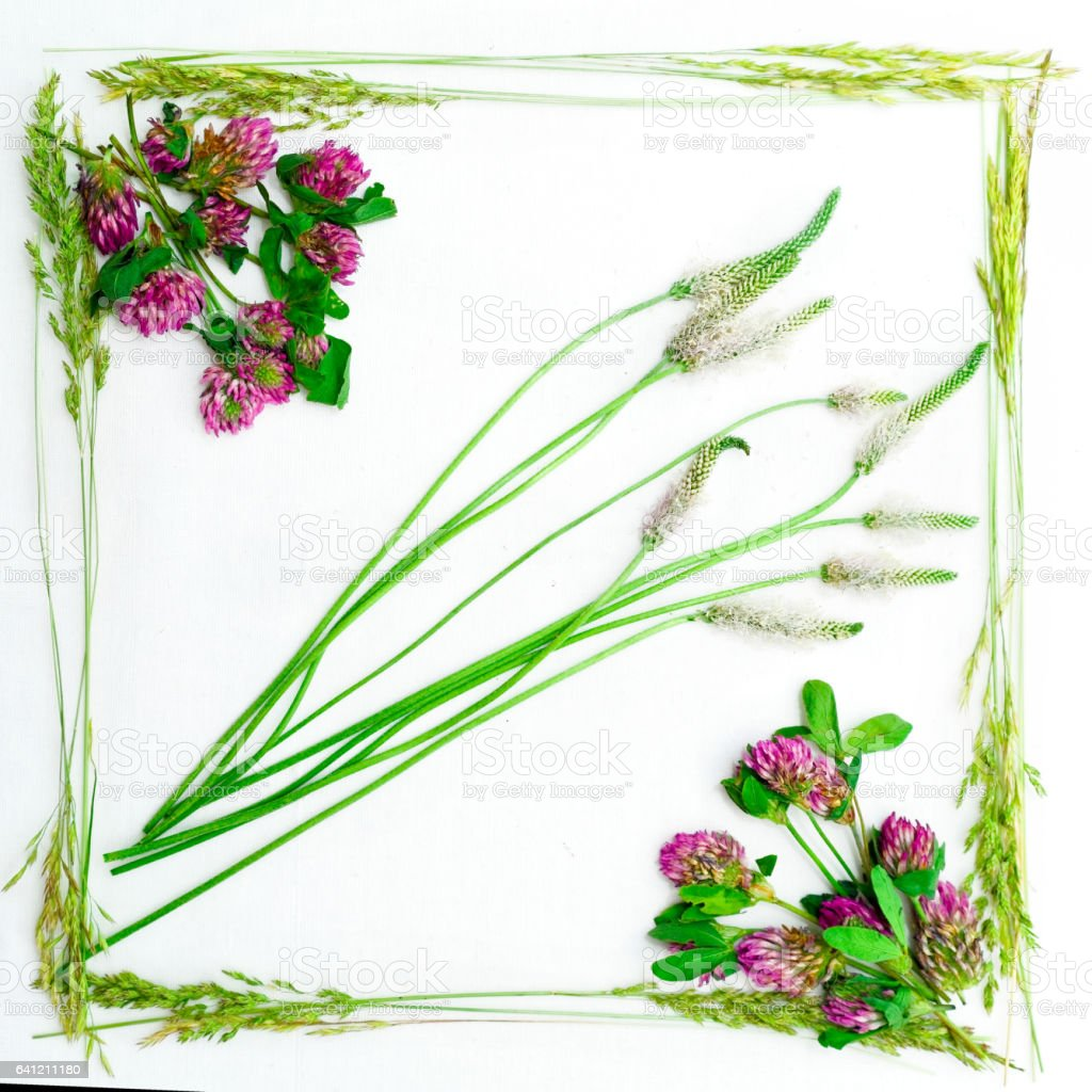 Frame of clover and field grass on the white background. Flat lay. stock photo