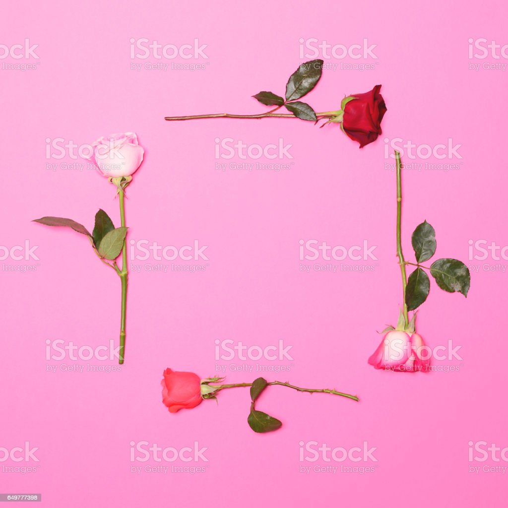 Frame of fresh colorful roses on pastel pink background - Flat lay stock photo