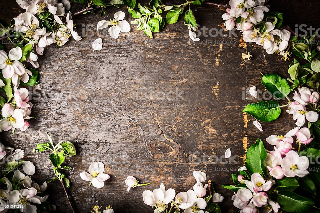 Frame of fruit trees flowers on rustic background, top view stock photo