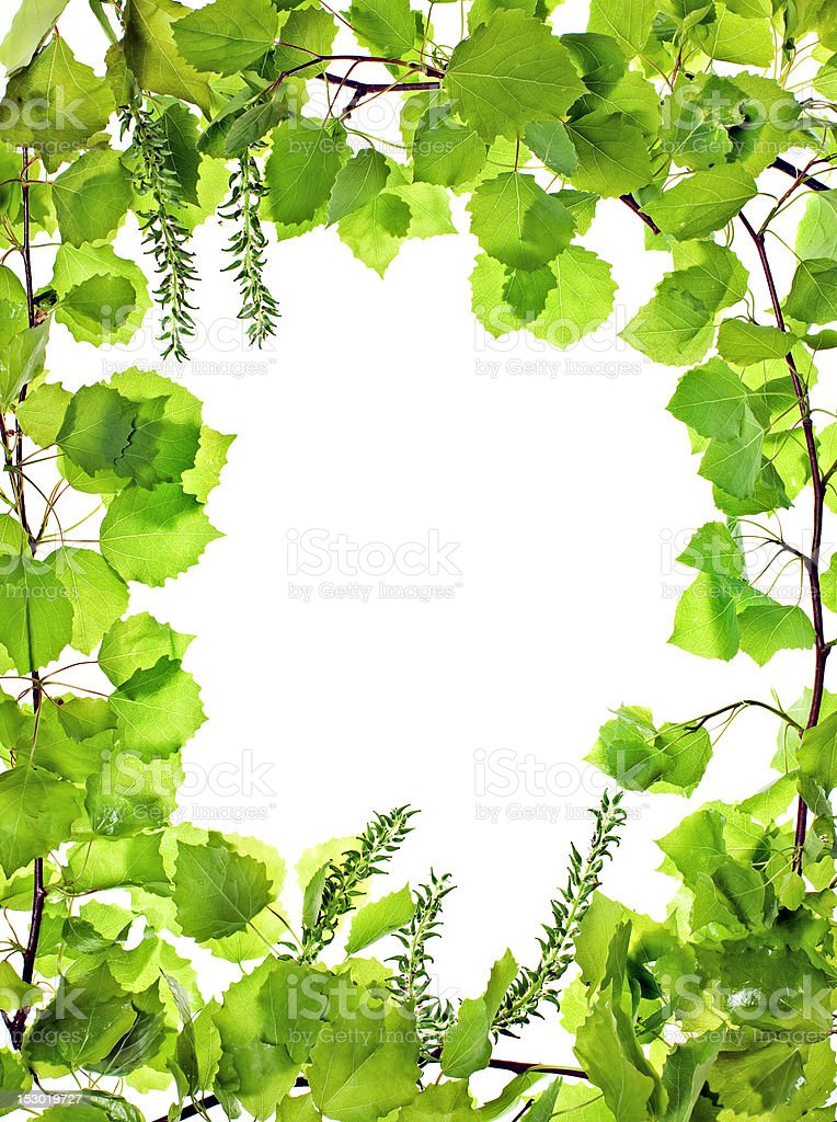 frame of green asp leafage; royalty-free stock photo