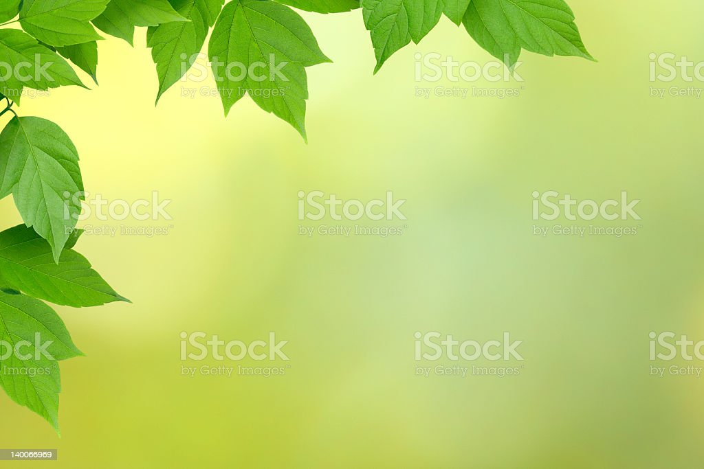 Frame of green leaves royalty-free stock photo