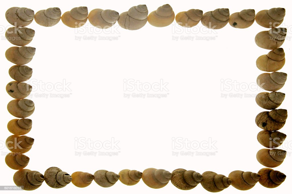 Frame of Moon Snail Shells royalty-free stock photo