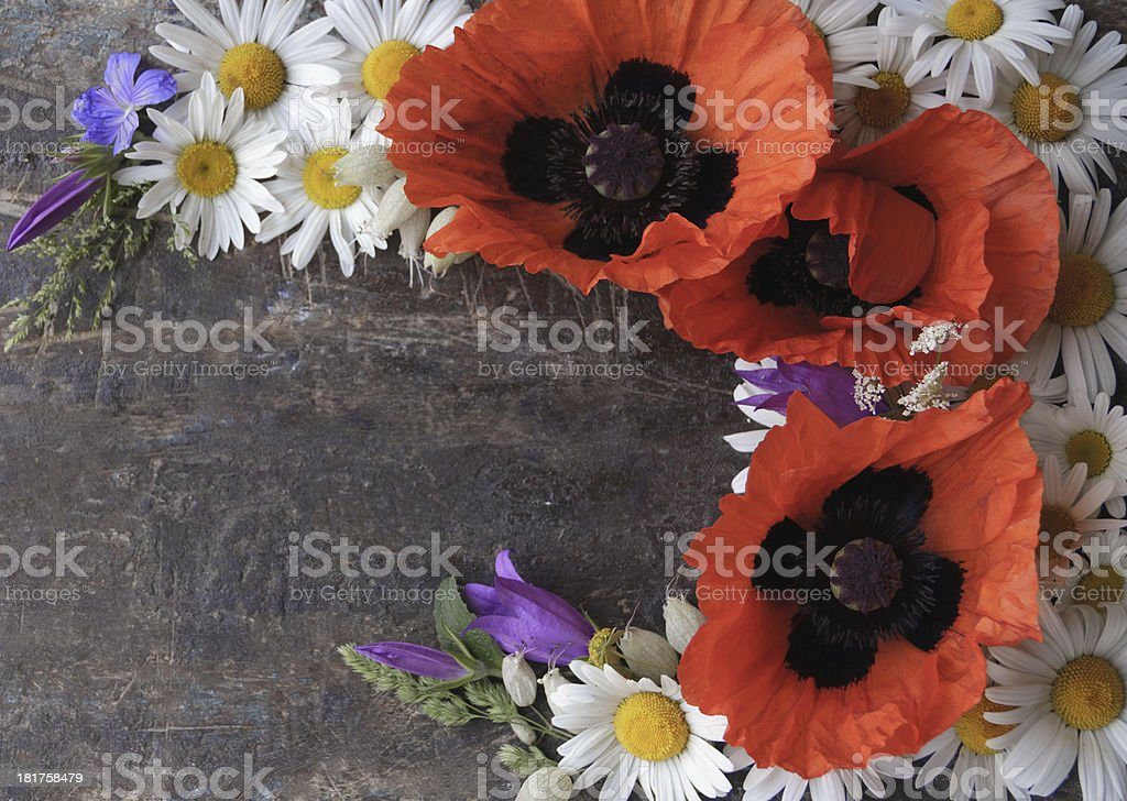 frame of poppies royalty-free stock photo