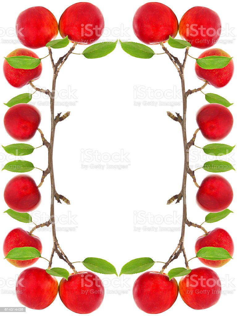 Frame of red apples on apple tree branch stock photo