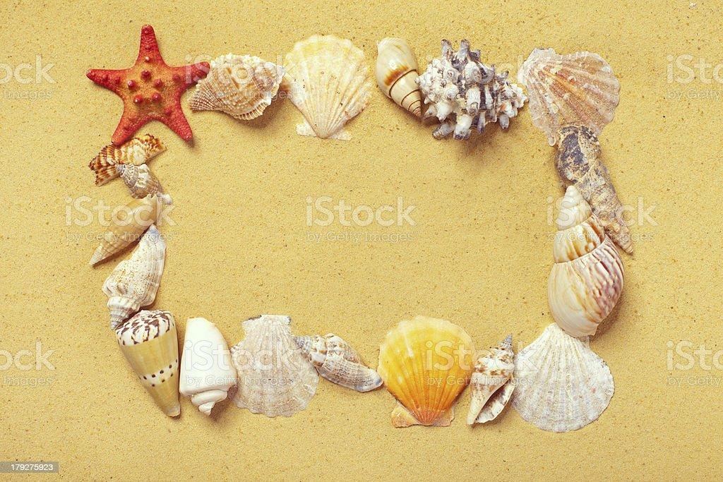 Frame of seashells on the sand royalty-free stock photo
