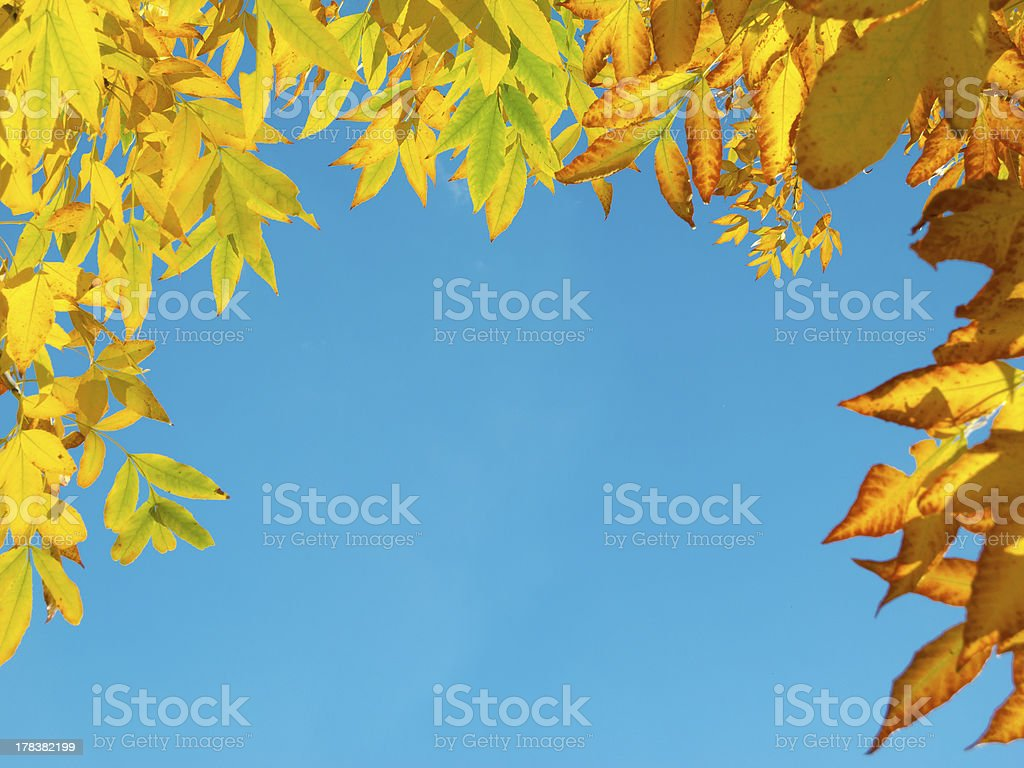 Frame of the yellow autumn leaves royalty-free stock photo