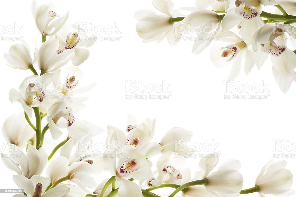 A frame of white flowers on a white background stock photo