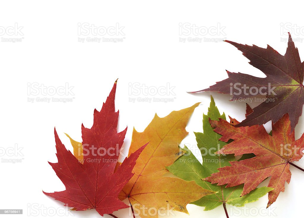Frame with autumn colored leaves stock photo