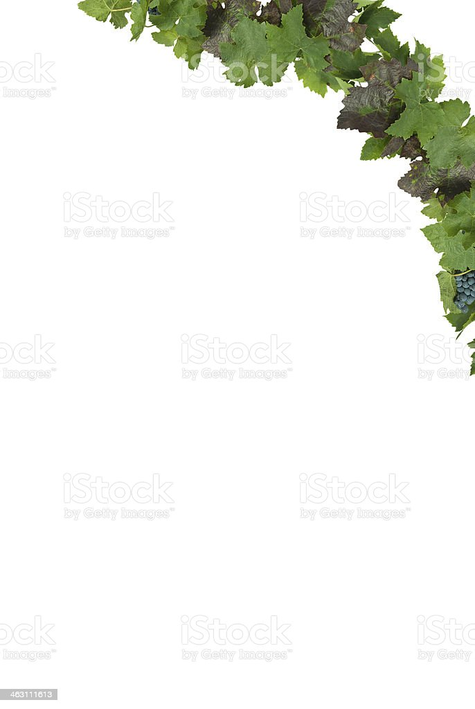 frame with grapes royalty-free stock photo