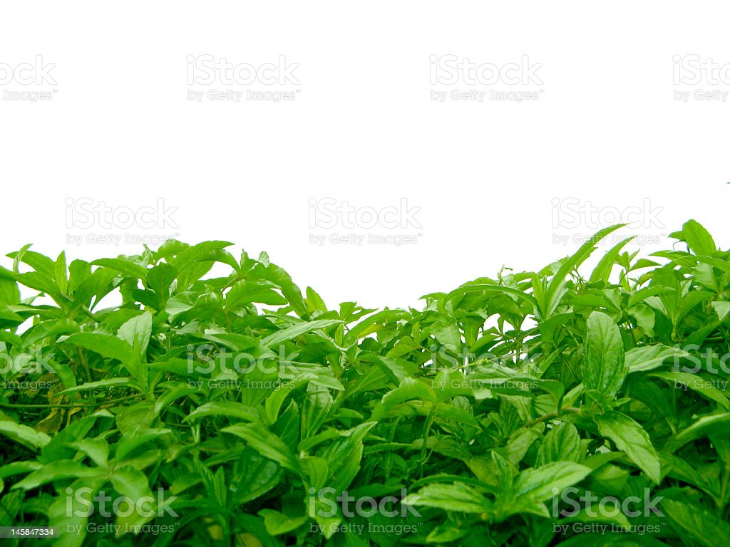 frame with leaves royalty-free stock photo