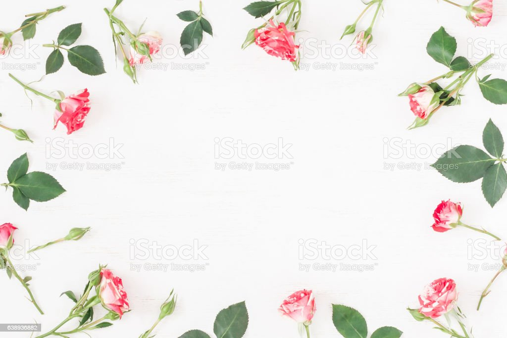 Frame with rose flowers. Flat lay, top view stock photo