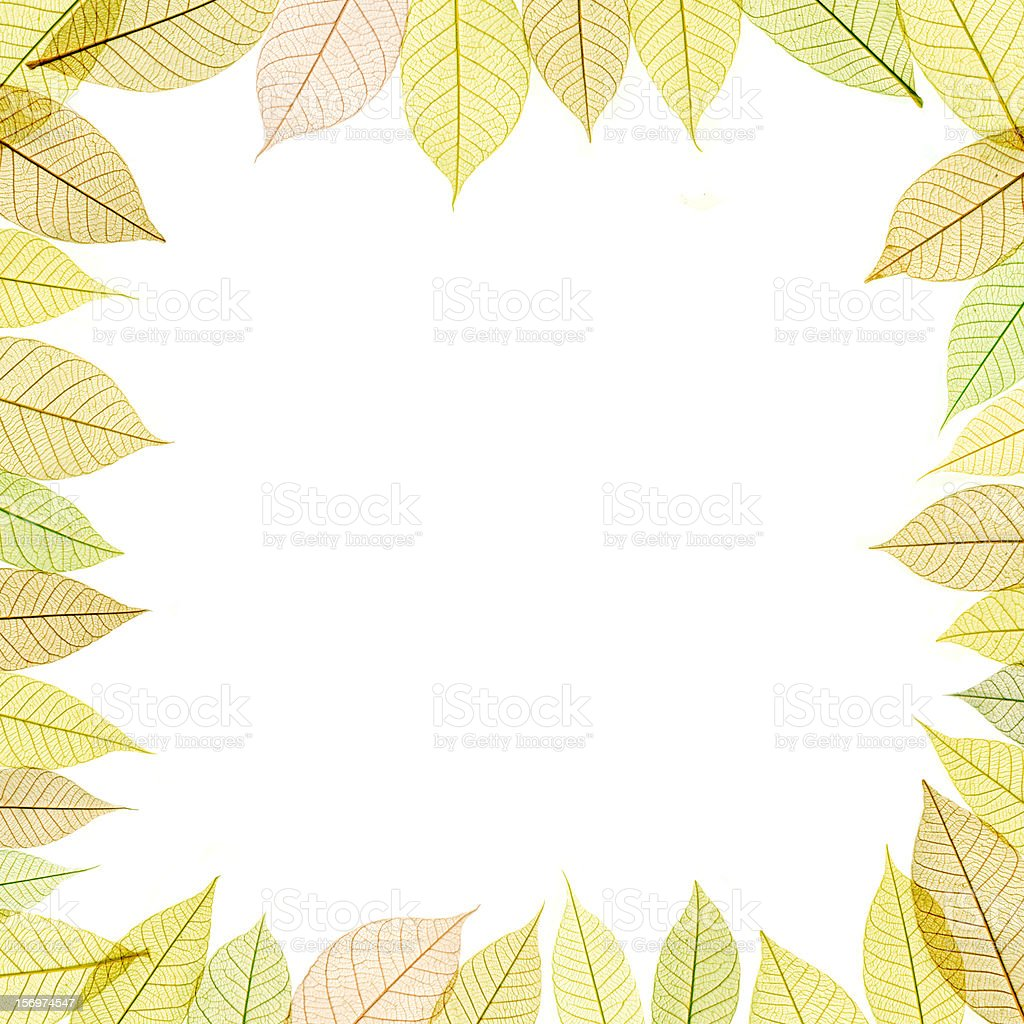 frame with transparent leaf royalty-free stock photo