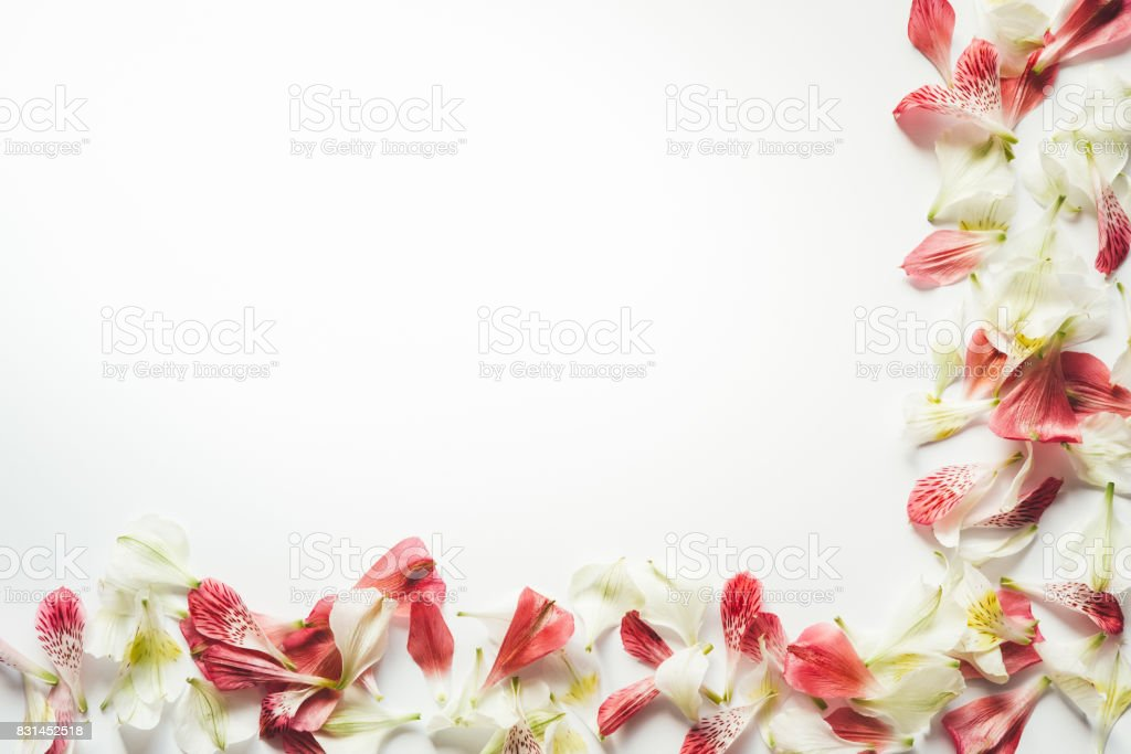 Frame With White And Red Petals stock photo