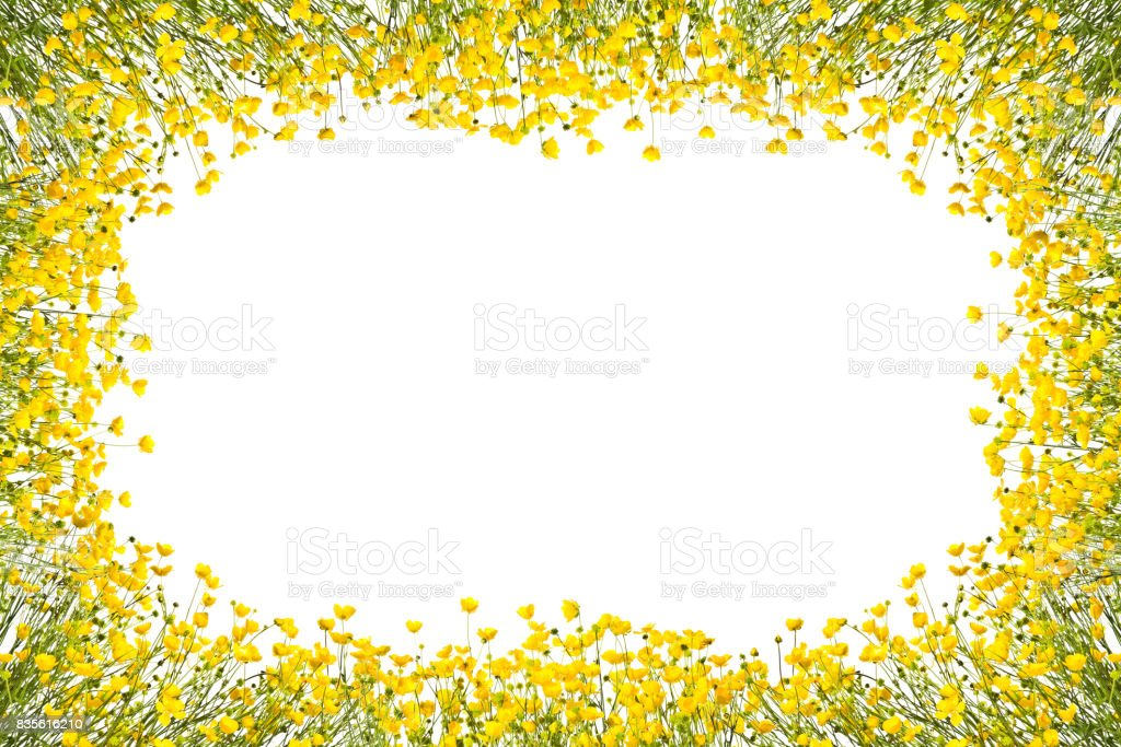 Frame with yellow buttercups on a white background. stock photo