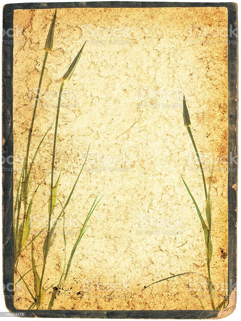 Framed herbal collage royalty-free stock photo